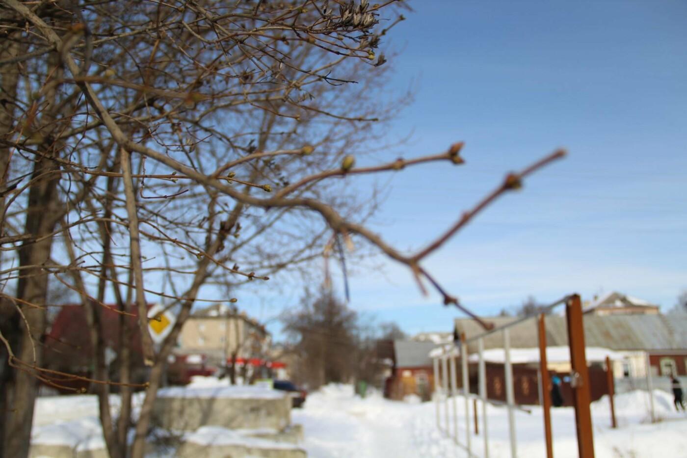 Аномалия или примета грядущего тепла: в Тамбове заметили первые почки на деревьях, фото-2