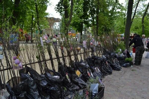 В Тамбове за Фестиваль цветов торговцам придется заплатить , фото-1