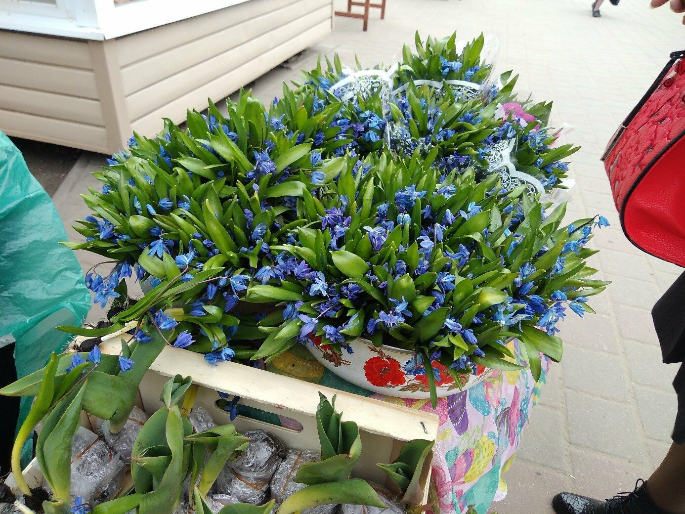 В Тамбове начали торговлю первоцветами , фото-1