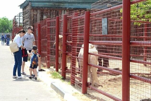 В тамбовском зоопарке появились новые обитатели, фото-1, Фото: ТГУ им. Г.Р. Державина