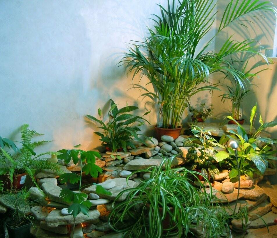 Тамбовчане из дома-интерната примут в подарок живые цветы, фото-1