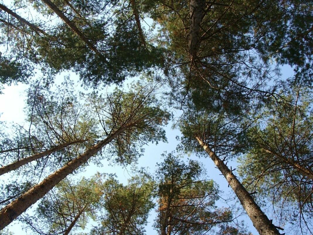 В Тамбове собираются выставить на продажу участок и здание в Пригородном лесу, фото-1