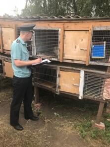 Тамбовские приставы взяли под арест кроликов, фото-1