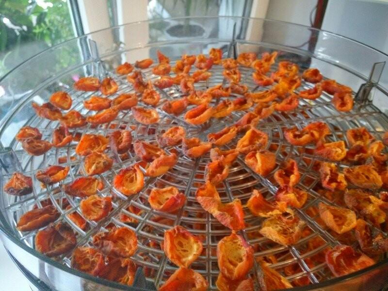 Тамбовчане собрали небывалый урожай абрикосов, фото-4