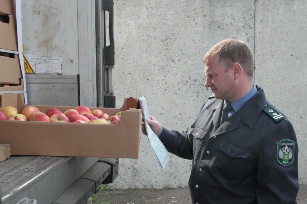 На Тамбовщине продают отличные овощи, но без документов, фото-1