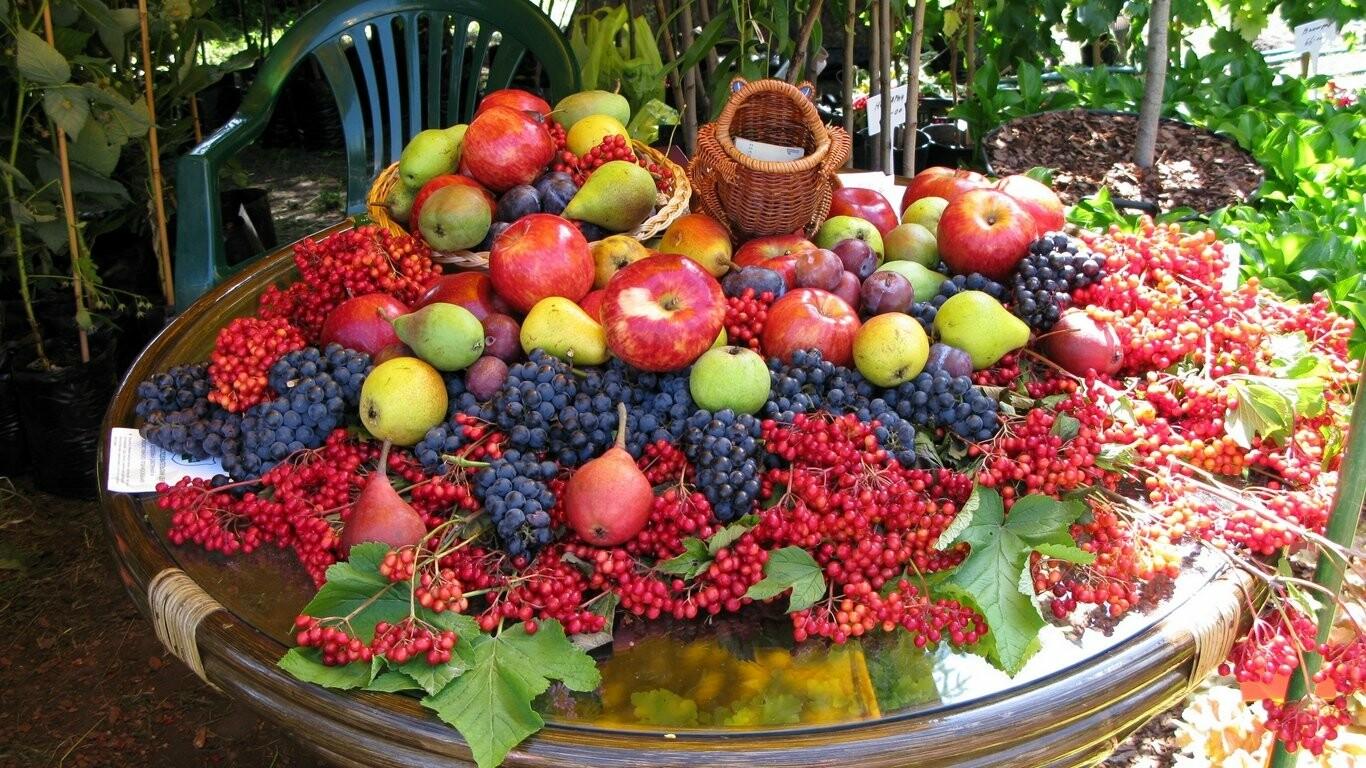 В Тамбовской области испекут огромный фруктово-ягодный пирог, фото-1