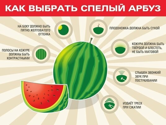 Тамбовчане открыли сезон бахчевых, фото-3