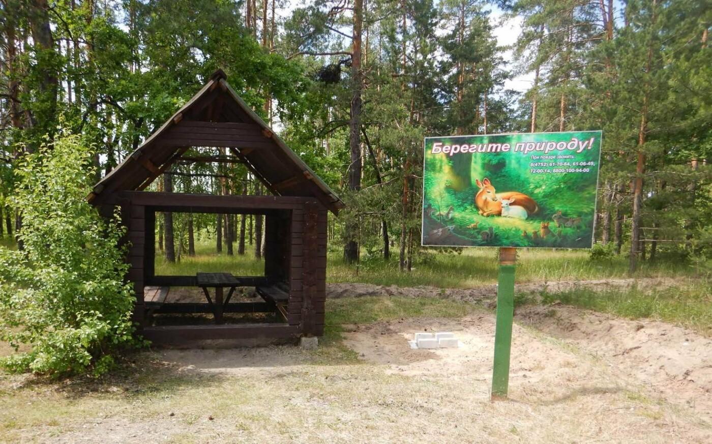Тамбовчан пустили в лес, фото-1