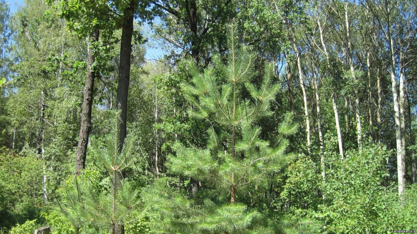 Жара снова закрыла для тамбовчан вход в лес, фото-1