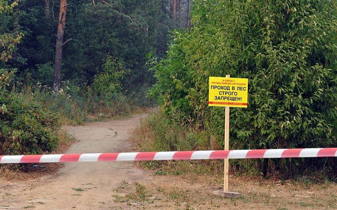 Над тамбовскими лесами нависла угроза пожаров, фото-1