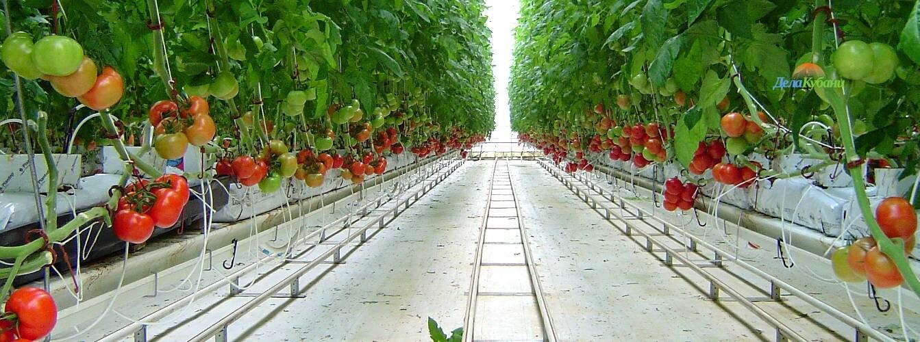 На Тамбовщине построят 88 гектаров теплиц, фото-1