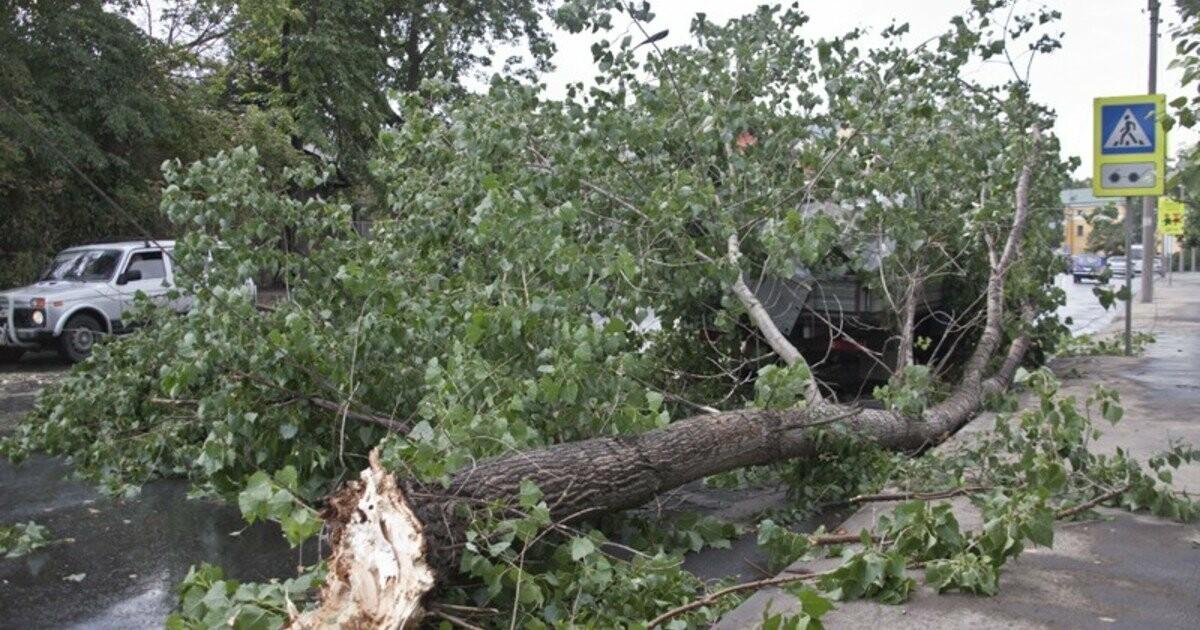 Тамбовчане требуют защитить их от опасных деревьев, фото-1