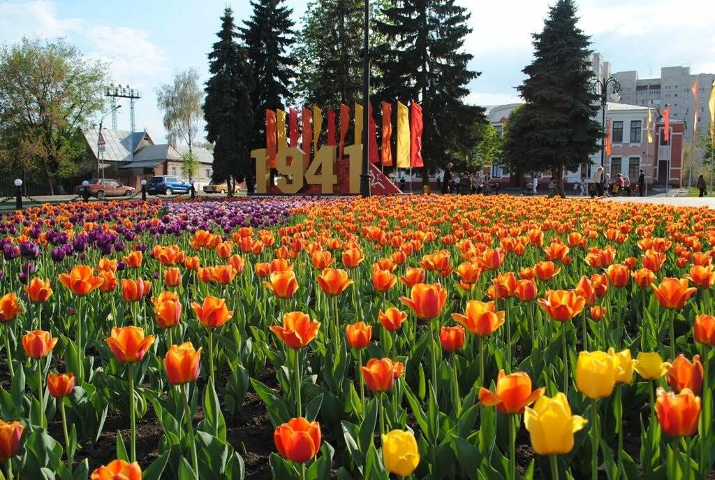 В Тамбове на тюльпаны потратят 2,5 миллиона рублей, фото-1