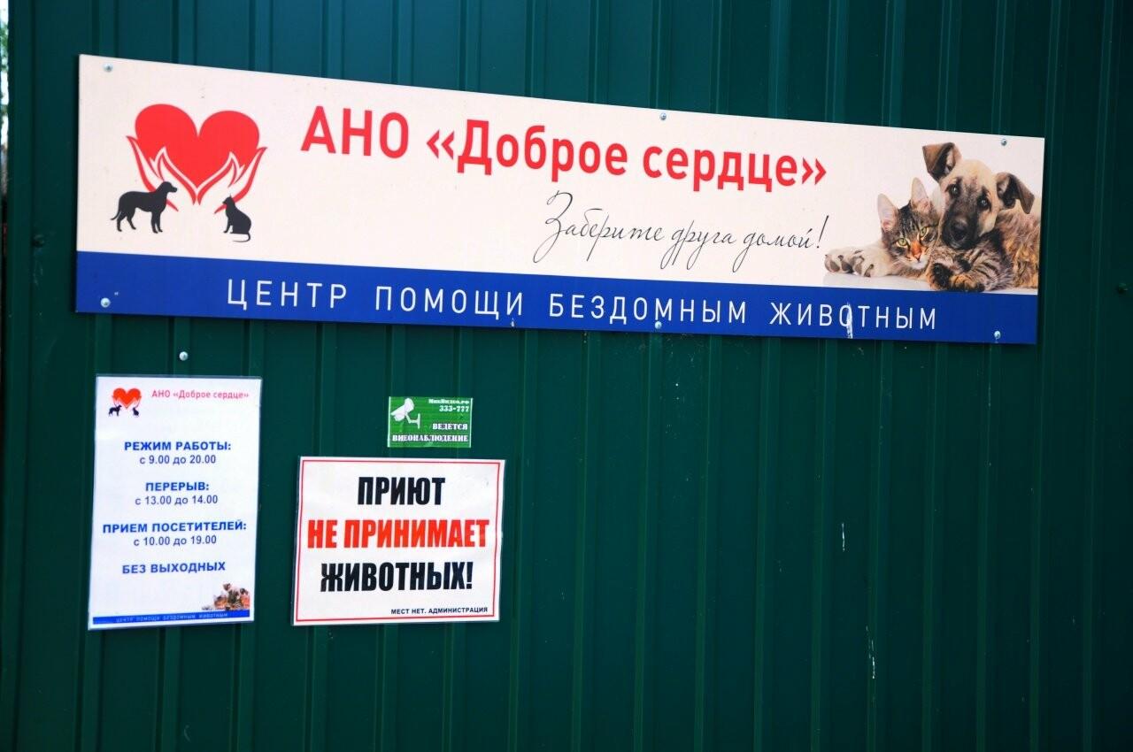 """У тамбовского приюта """"Доброе сердце"""" растут долги, фото-1"""