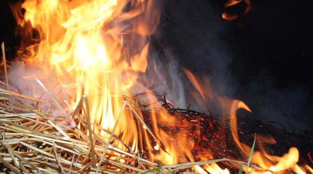На Тамбовщине мужчина спалил соседского быка, фото-1