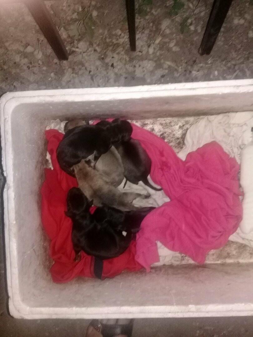 В Тамбове приют «Доброе сердце» остался без денег, фото-2