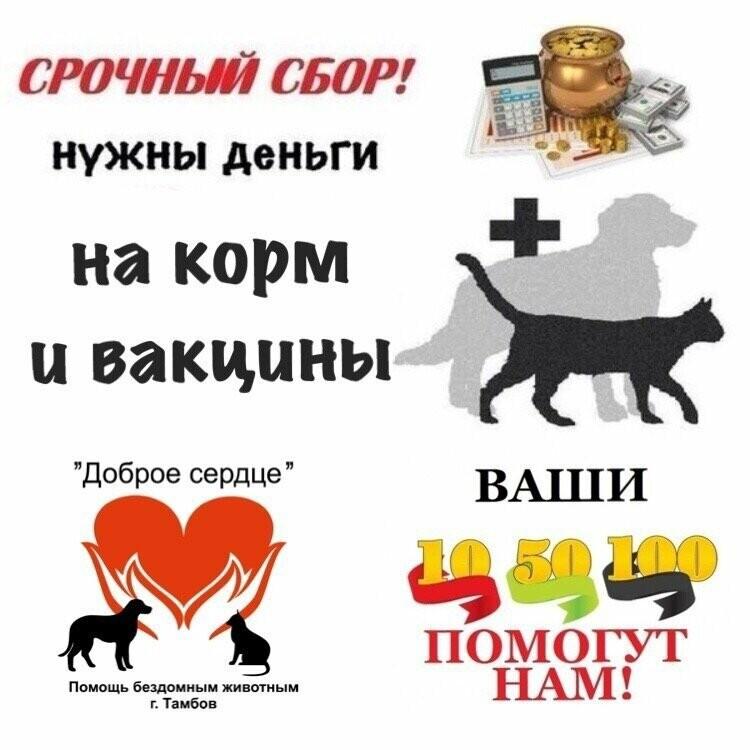 В Тамбове приют «Доброе сердце» остался без денег, фото-1