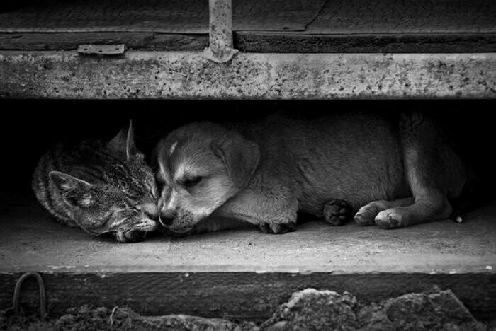 На тамбовских дачах стали появляться бродячие животные, фото-4