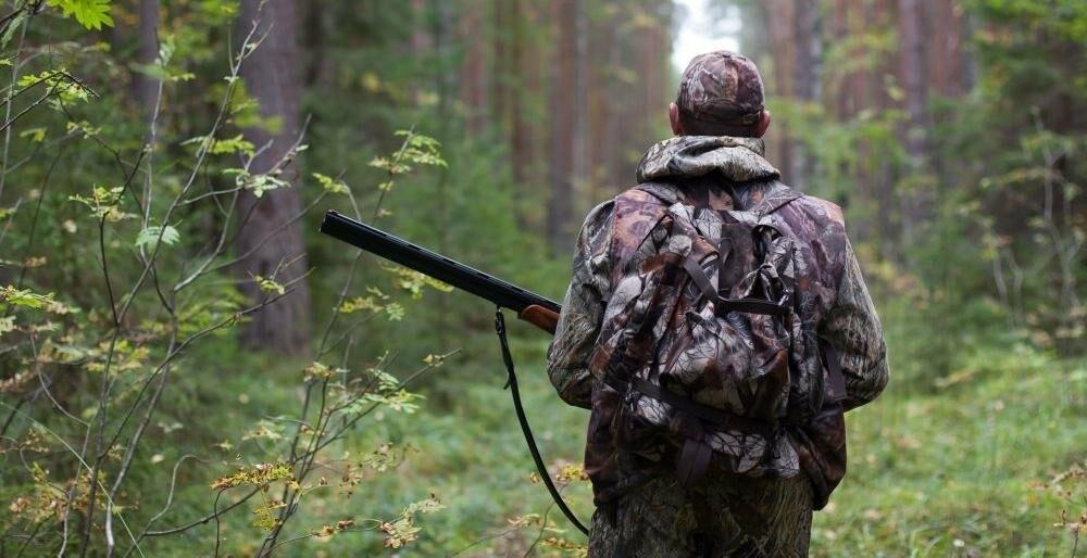 Разрешение на добычу лося выдали лишь одному тамбовчанину, фото-1