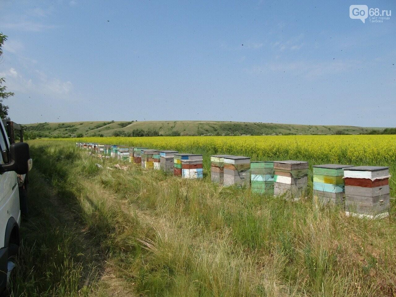 Пасека семьи Тюриных накормит тамбовчан мёдом акации, фото-1