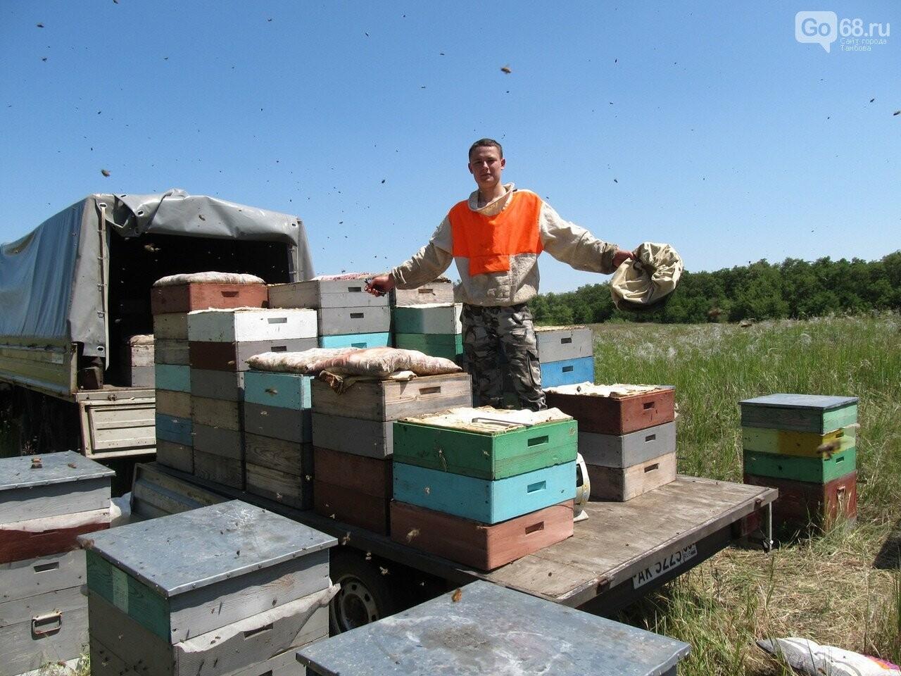 Пасека семьи Тюриных накормит тамбовчан мёдом акации, фото-2