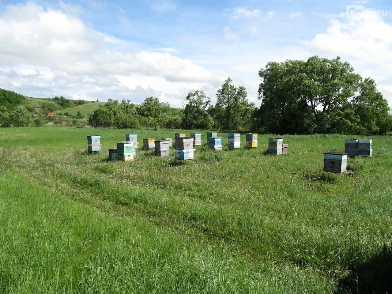 Пасека семьи Тюриных накормит тамбовчан мёдом акации, фото-3