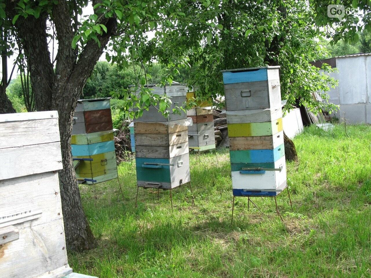 Пасека семьи Тюриных накормит тамбовчан мёдом акации, фото-4