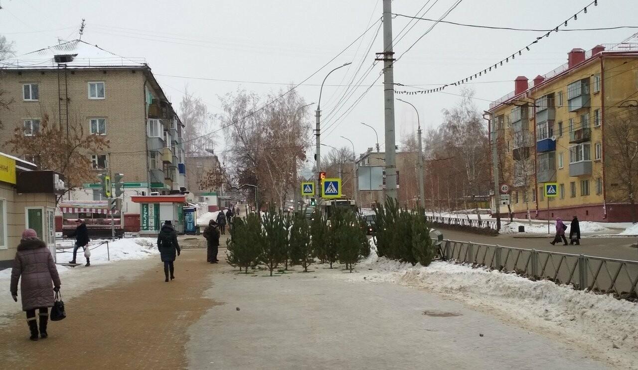 В Тамбове стартовали продажи новогодних елок, фото-3
