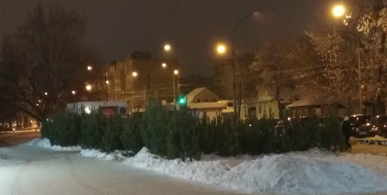 В Тамбове стартовали продажи новогодних елок, фото-2