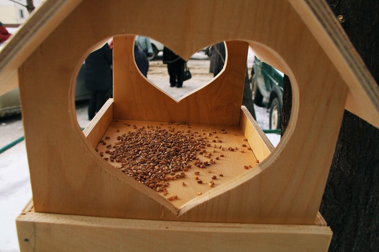 Во дворах тамбовской префектуры повесили кормушки с сердечками, фото-2