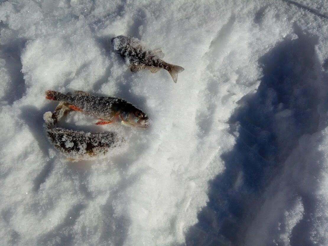 Ни хвоста, ни чешуи: в Тамбове провели детские соревнования по зимней рыбалке, фото-10