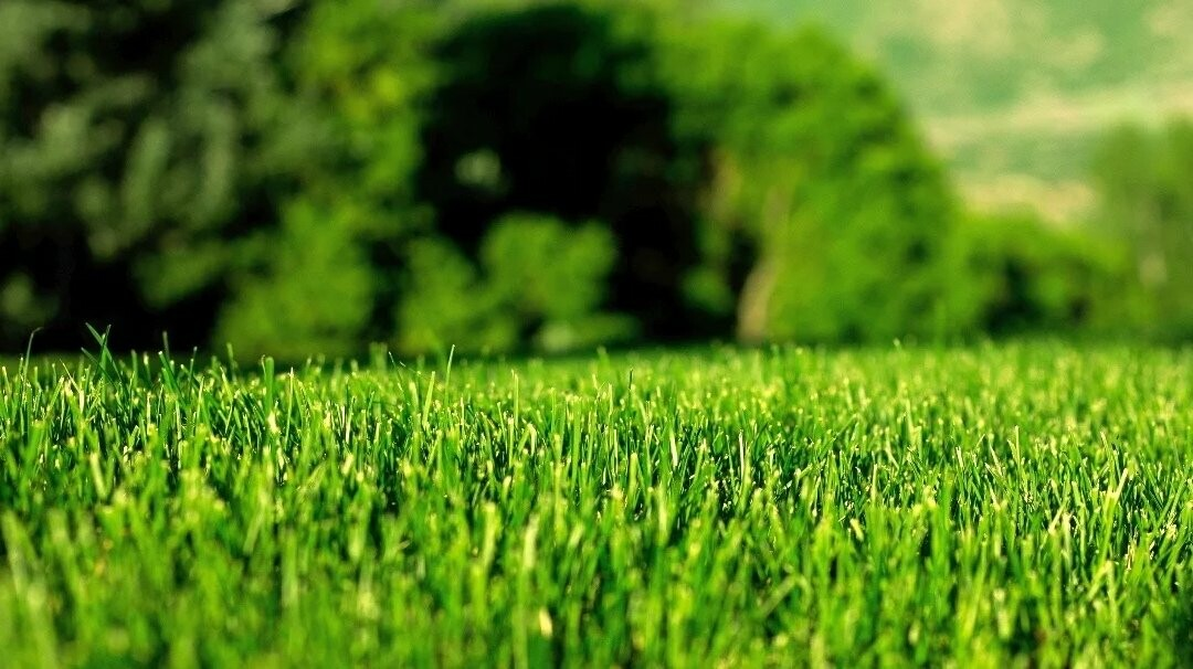 Специальный проект «Сад.Огород.Цветы» от городского портала Go68.ru, фото-23