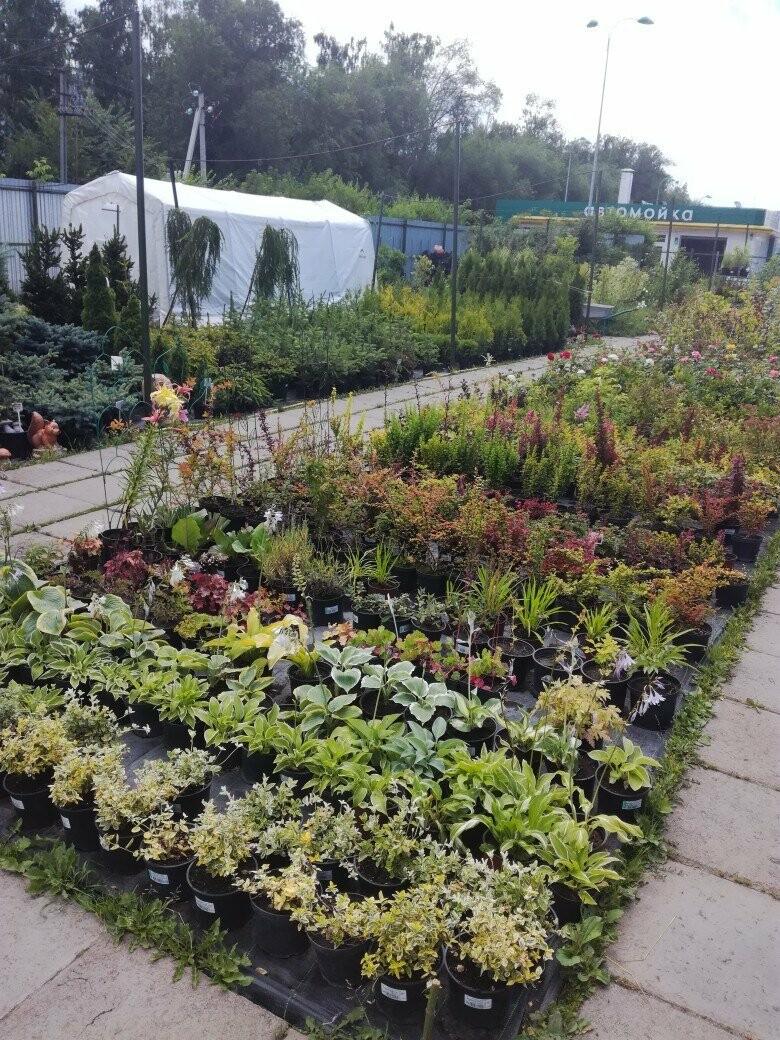 Специальный проект «Сад.Огород.Цветы» от городского портала Go68.ru, фото-4