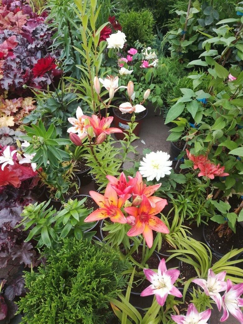 Специальный проект «Сад.Огород.Цветы» от городского портала Go68.ru, фото-5
