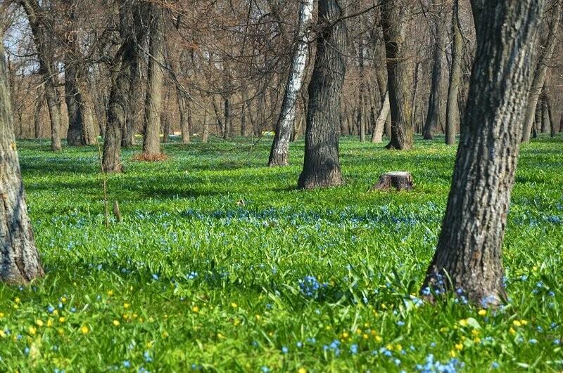 Фотообзор: праздник первоцвета в Знаменке, фото-4