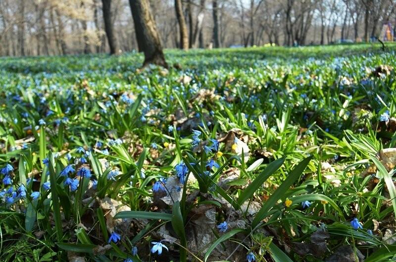 Фотообзор: праздник первоцвета в Знаменке, фото-3