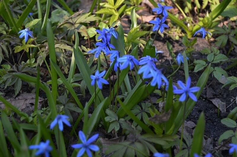 Фотообзор: праздник первоцвета в Знаменке, фото-2