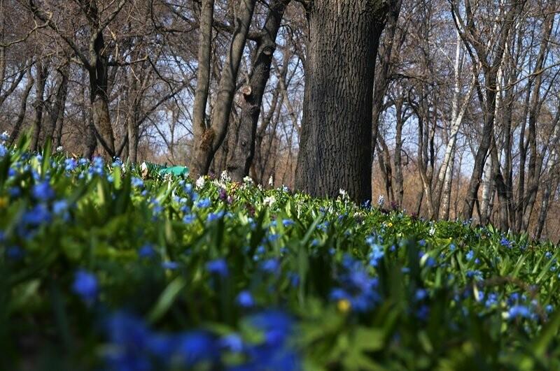 Фотообзор: праздник первоцвета в Знаменке, фото-1