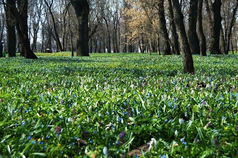 Фотообзор: праздник первоцвета в Знаменке, фото-6