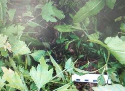 Тамбовчанка оставила новорожденного ребенка у заброшенного дома, фото-1