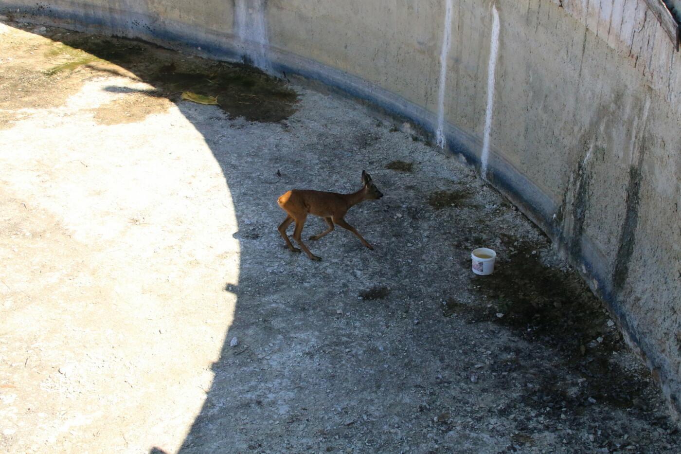 На котовских очистных спасли косулю, фото-2