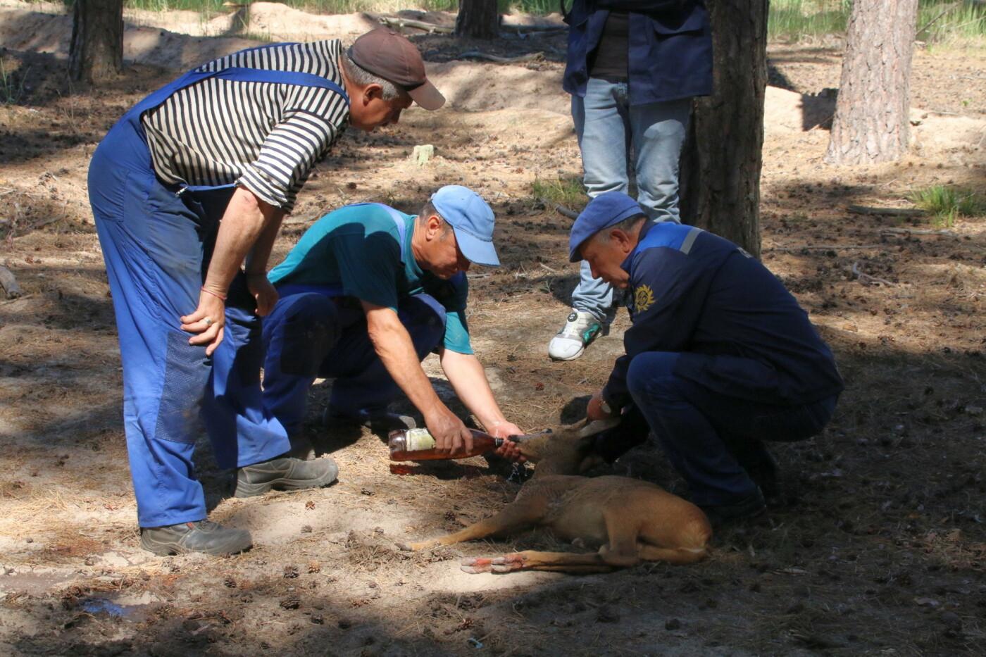 На котовских очистных спасли косулю, фото-4