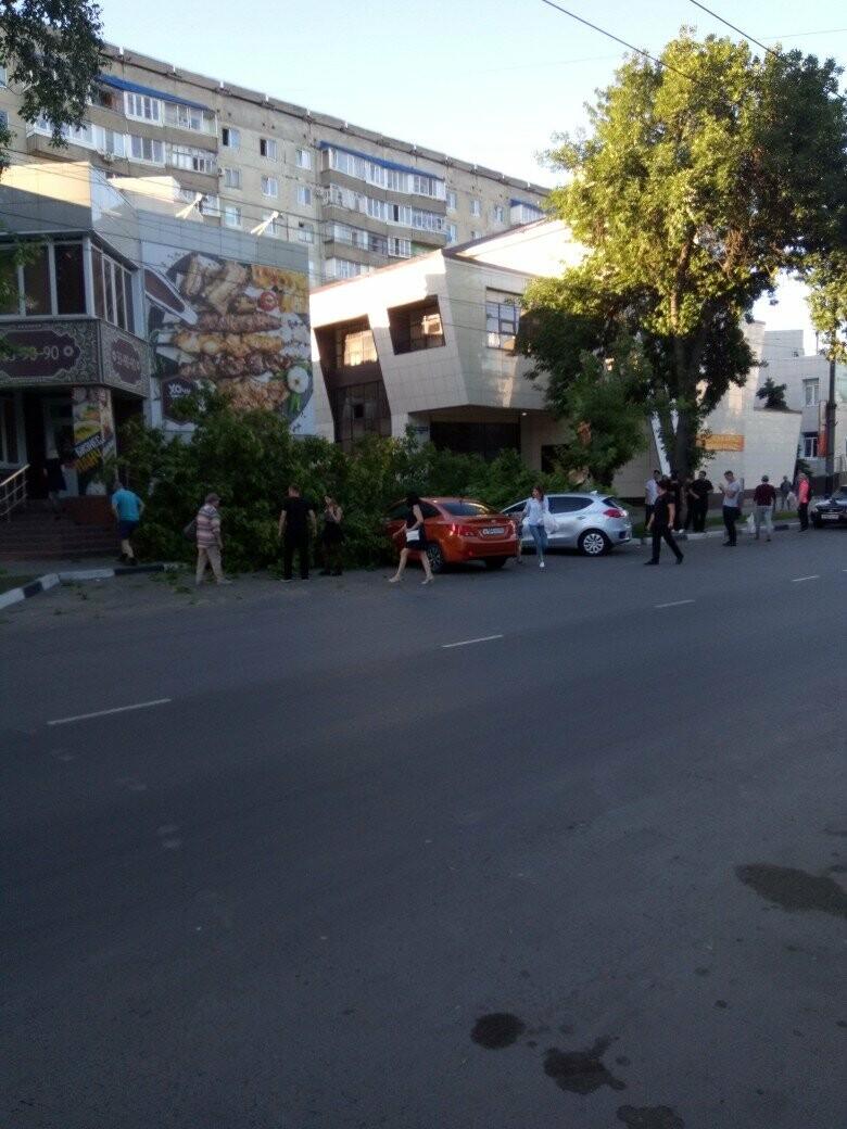 В центре Тамбова упавшее дерево придавило две иномарки, фото-3