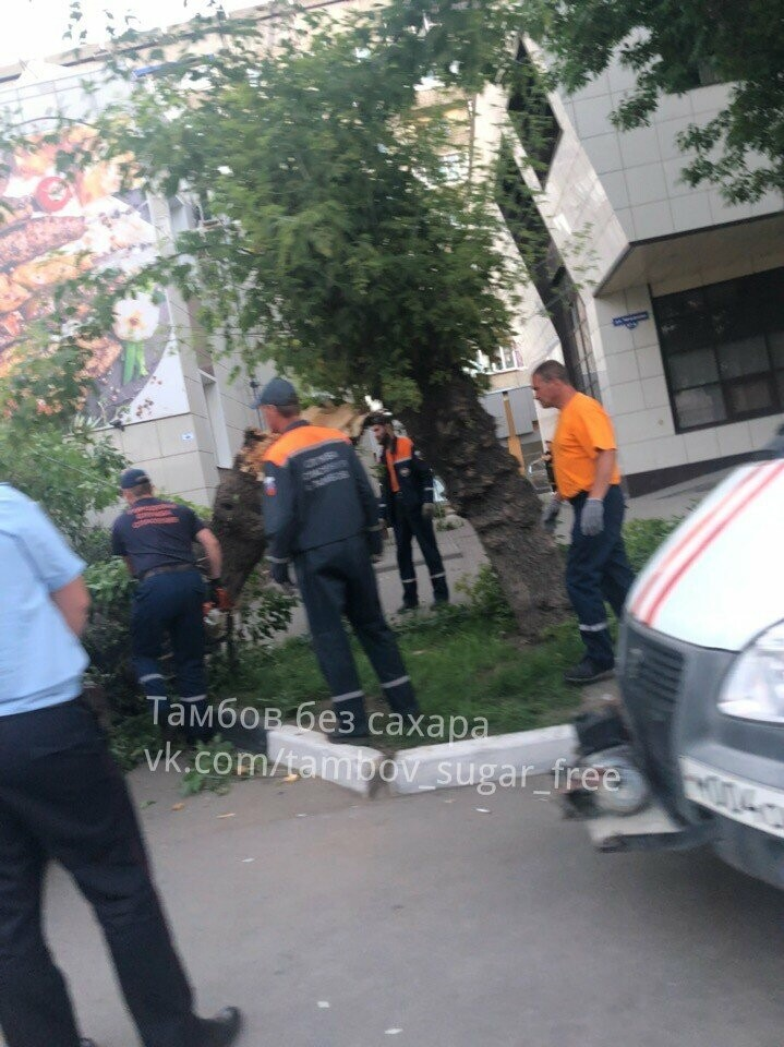 В центре Тамбова упавшее дерево придавило две иномарки, фото-4