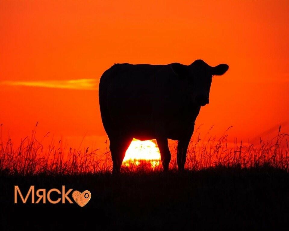Настоящее деревенское экологически чистое мясо у вас дома? Легко!, фото-6