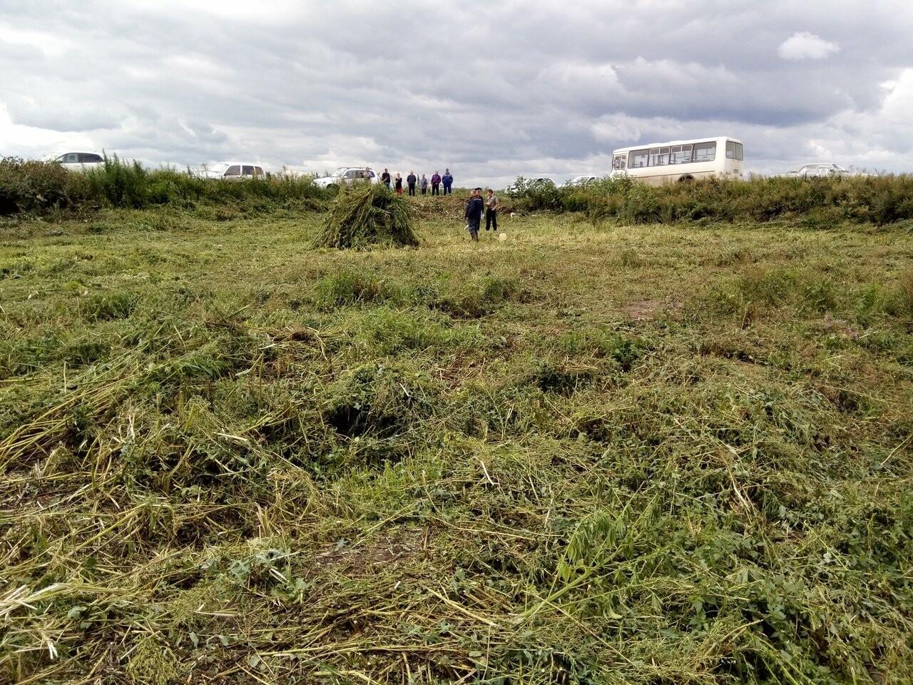 В Никифоровском районе полиция уничтожила целое поле дикой конопли, фото-2