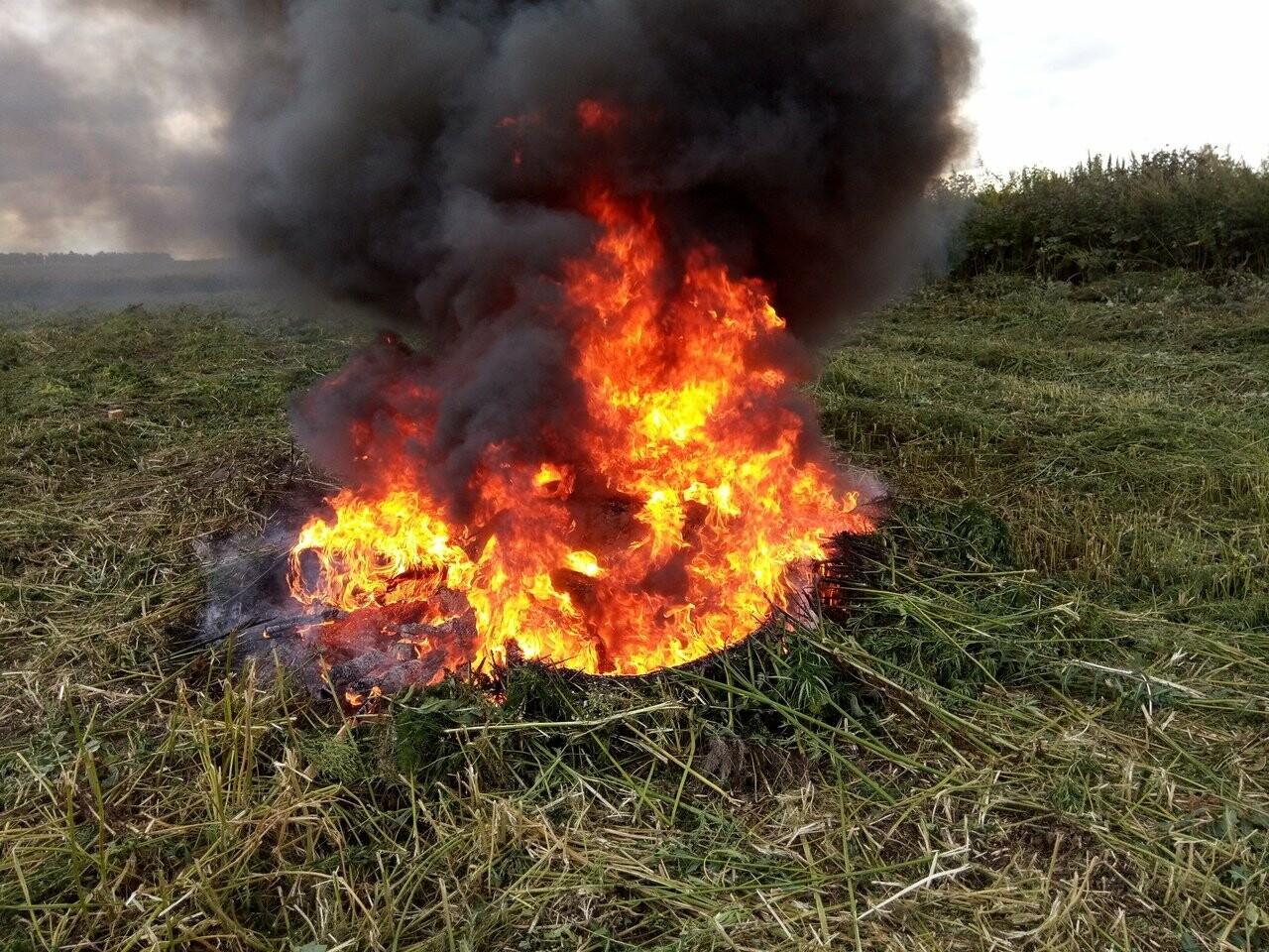 В Никифоровском районе полиция уничтожила целое поле дикой конопли, фото-3