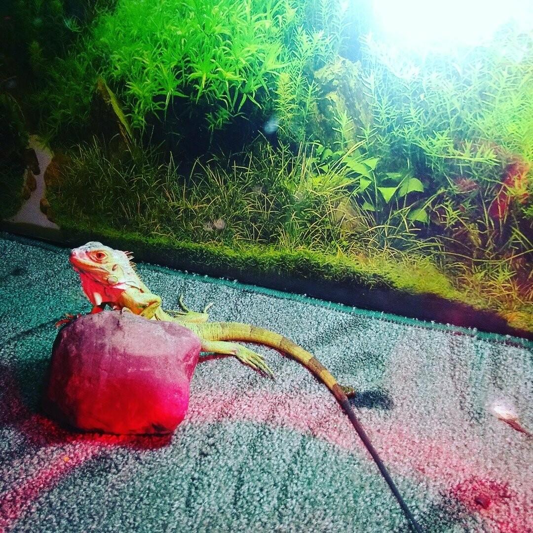 Когда ёж игуане товарищ: в тамбовской семье обитают экзотические животные, фото-4