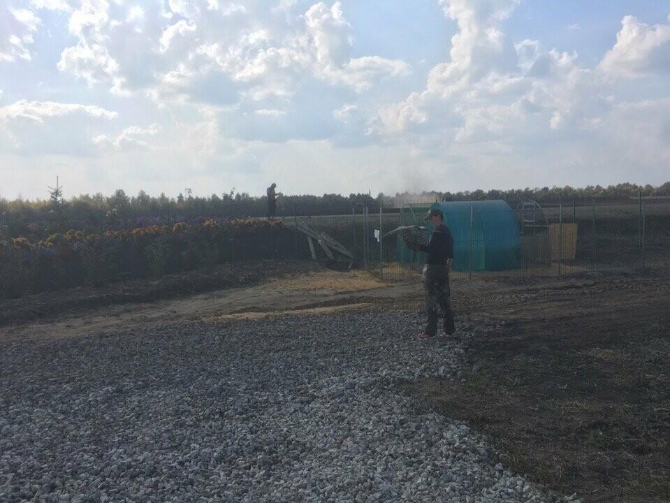 Мичуринские сокольники тренируют ястребов и соколов , фото-1