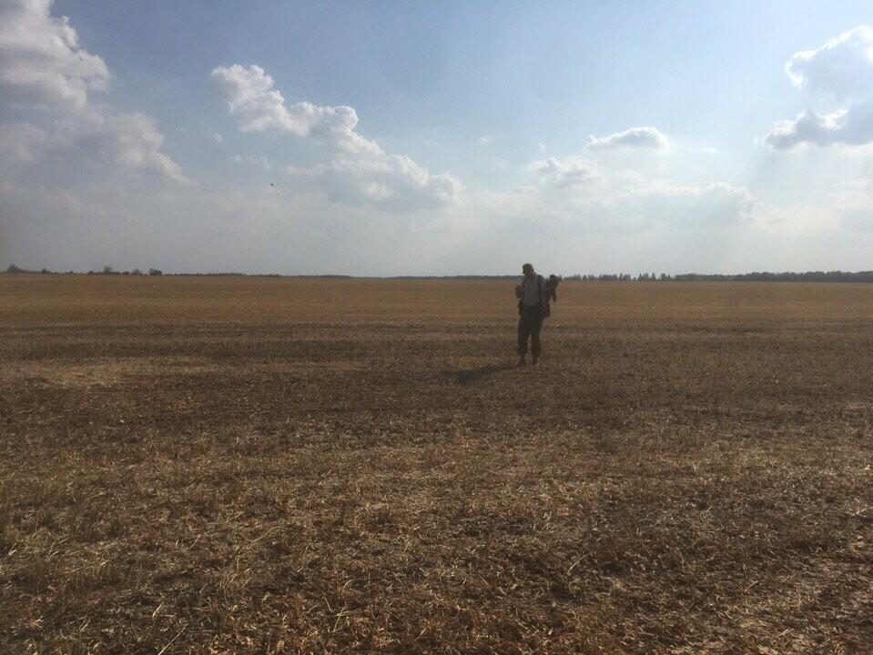 Мичуринские сокольники тренируют ястребов и соколов , фото-2